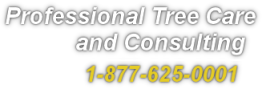 Professional Tree Care and Consulting Services